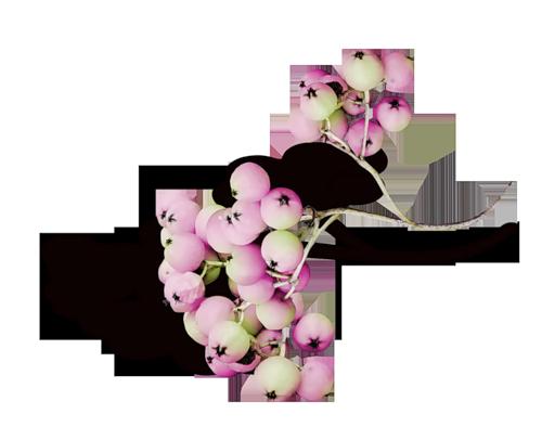 tubes_fleurs_tiram_612