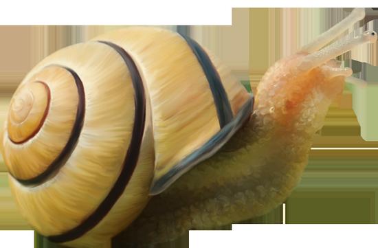 tubes_escargots_tiram_63
