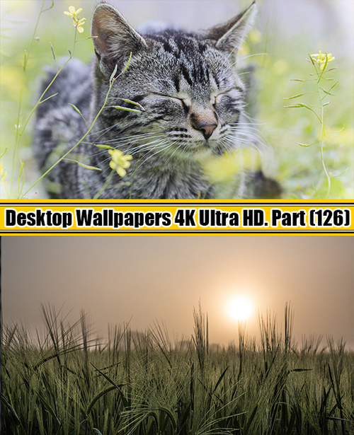 Deskop Wallpapers 4K Ultra HD. Part 126