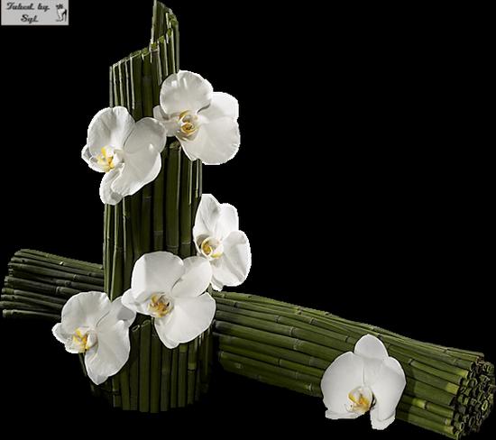 tubes_fleurs_tiram_402