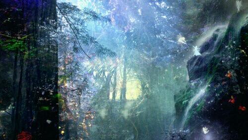 Το μαγεμένο δάσος