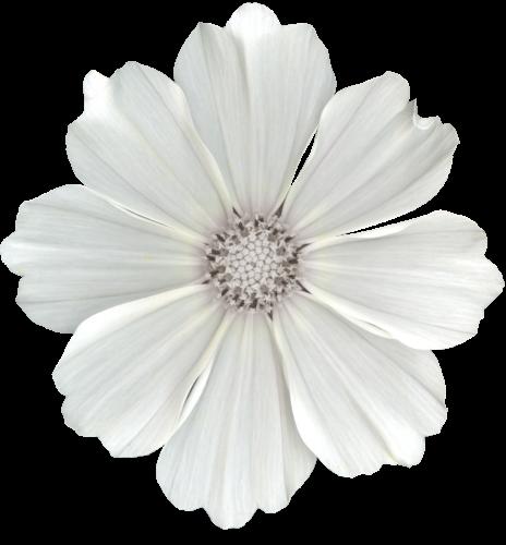 tubes_fleurs_tiram_675