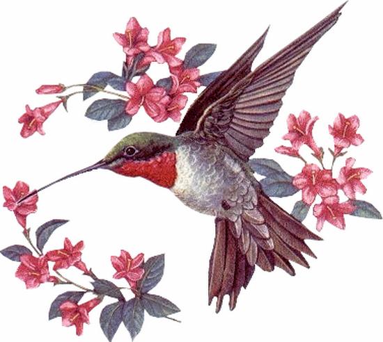 tubes_oiseaux_tiram_199