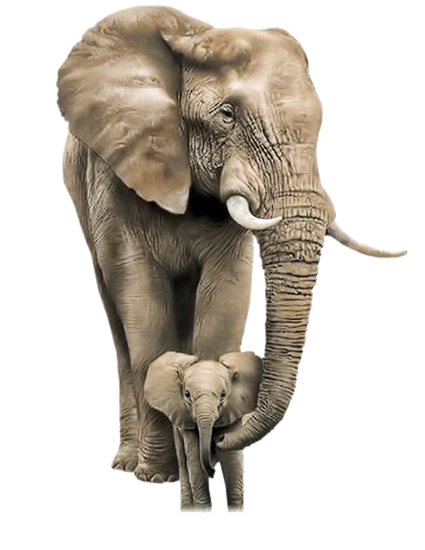 tubes_elephants_tiram_215
