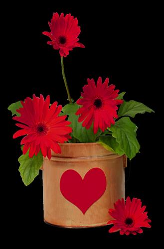 tubes_fleurs_saint_valentin_tiram_239