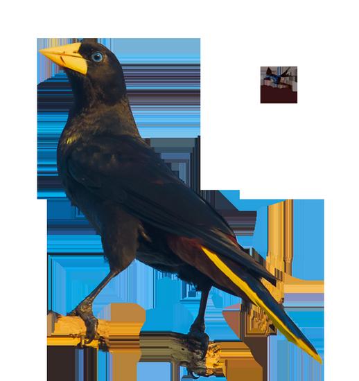 tubes_oiseaux_tiram_33