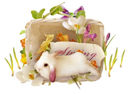 lapins_paques_tiram_497