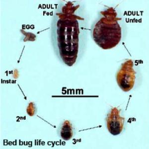 Bed_Bug_Control_Calgary