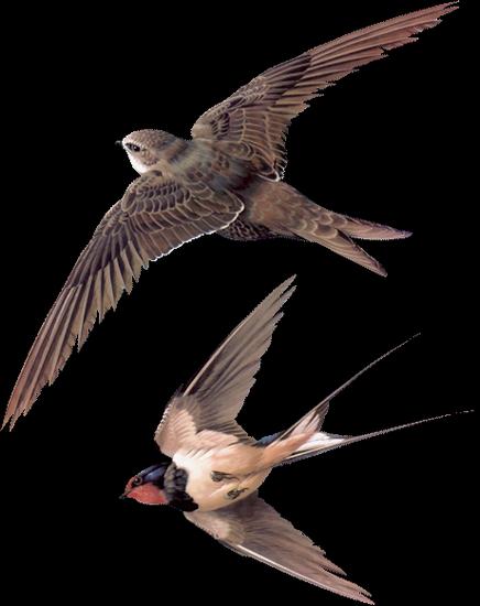 tubes_oiseaux_tiram_244