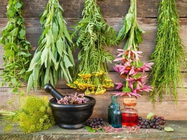 Лечебни съставки при гонорея | Ayurvedasofia.bg