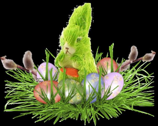 fleurs_paques_tiram_116