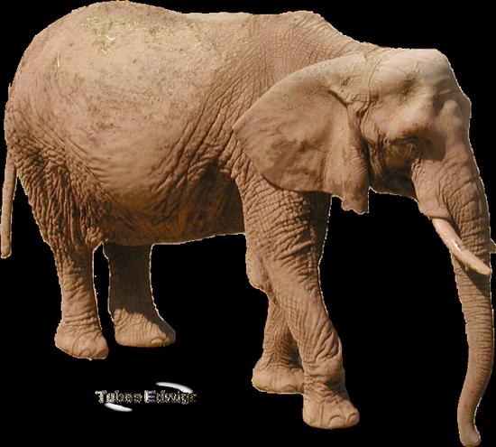 tubes_elephants_tiram_102