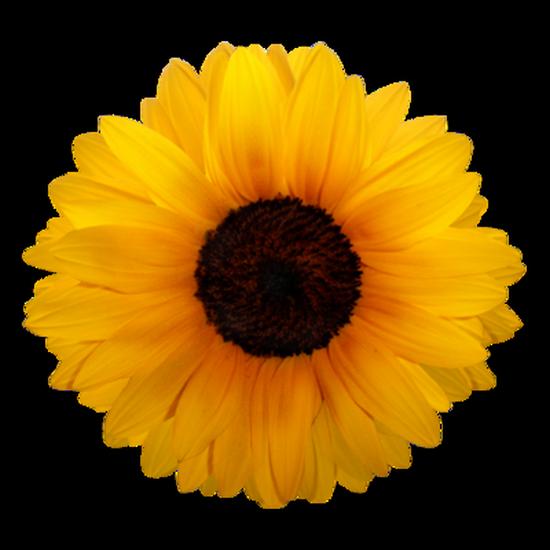 tubes_fleurs_tiram_339