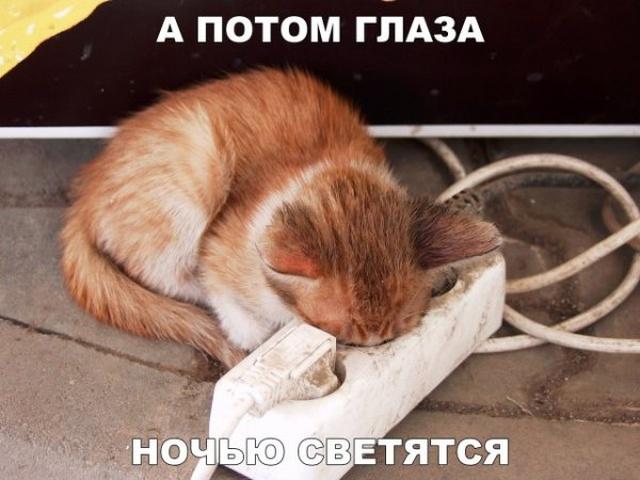 1539036498_drunkcow_net_foto_prikoly_32