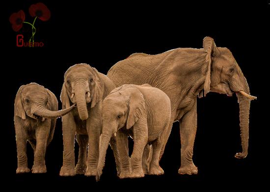tubes_elephants_tiram_409