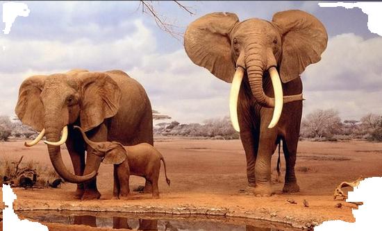 tubes_elephants_tiram_429