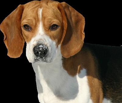 chien_tiram_114