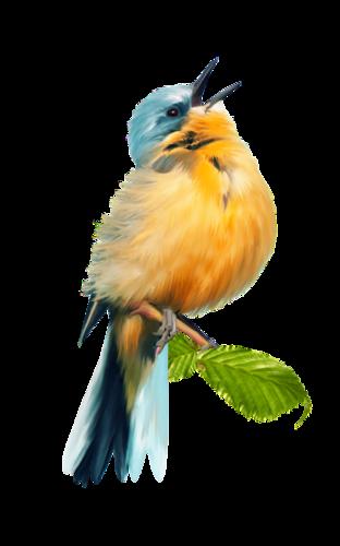 tubes_oiseaux_tiram_5