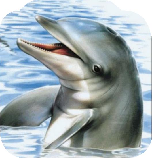 tubes_dauphins_tiram_129