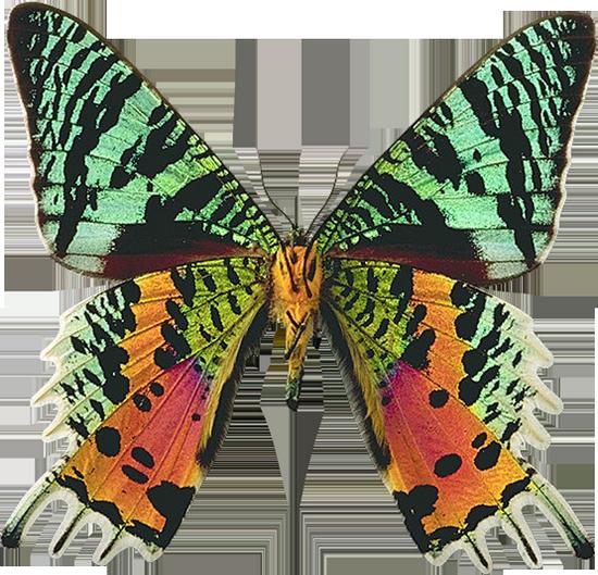 tubes_papillon_tiram_195