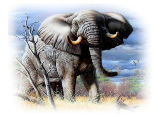 tubes_elephants_tiram_286