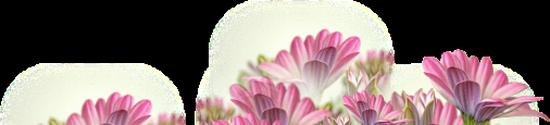 tubes_fleurs_tiram_452