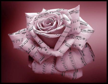 tubes_fleurs_tiram_907