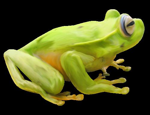 grenouille_tiram_10