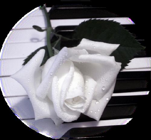 tubes_fleurs_saint_valentin_tiram_74