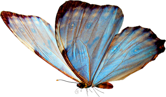 tubes_papillon_tiram_183