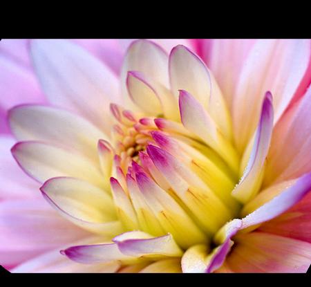 tubes_fleurs_tiram_873