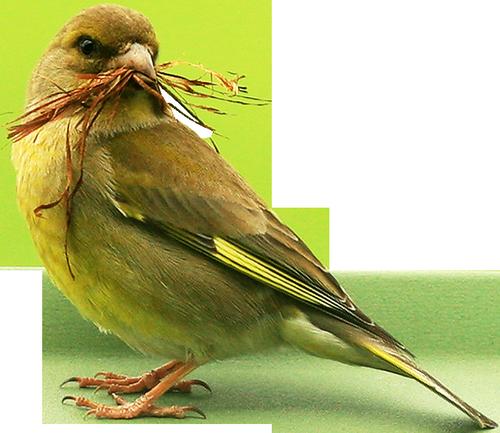 tubes_oiseaux_tiram_77