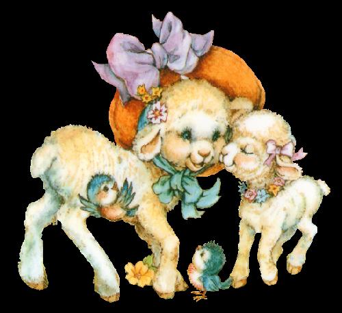 mouton_tiram_68