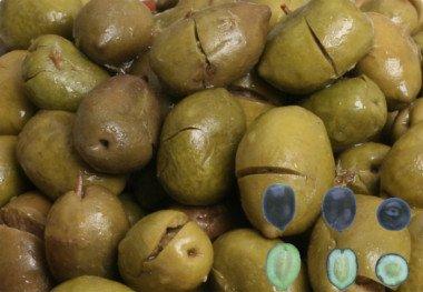 Aceitunas machadas de la variedad Pico Limón