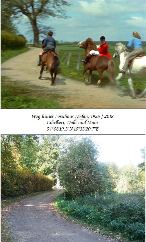 Weg-hinter-Forsthaus-Dodau