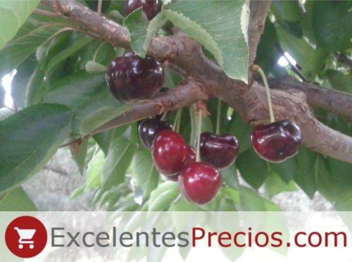 Cereza Cristalina, variedad sin rabo, Árbol cereza Cristalina, cereza dura, de muy buen sabor y tamaño