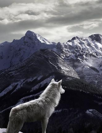 Las montañas de los lobos