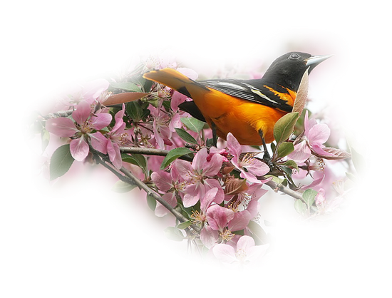 tubes_oiseaux_tiram_167