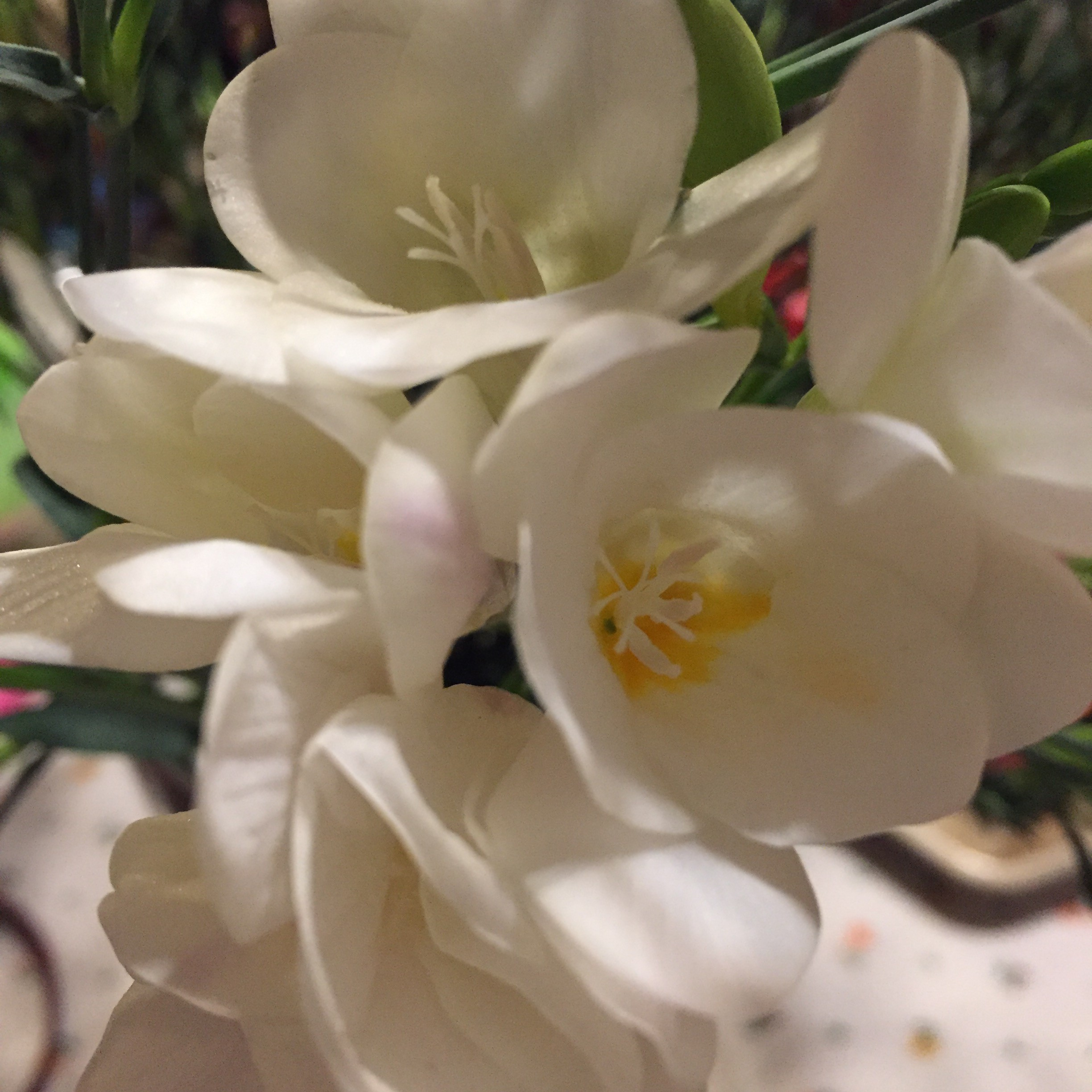 New Flower April 2 2018 White Flower Mama Cormier
