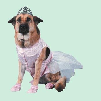 tubes_chiens_tiram_3