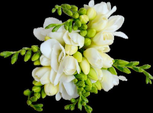 fleurs_paques_tiram_177