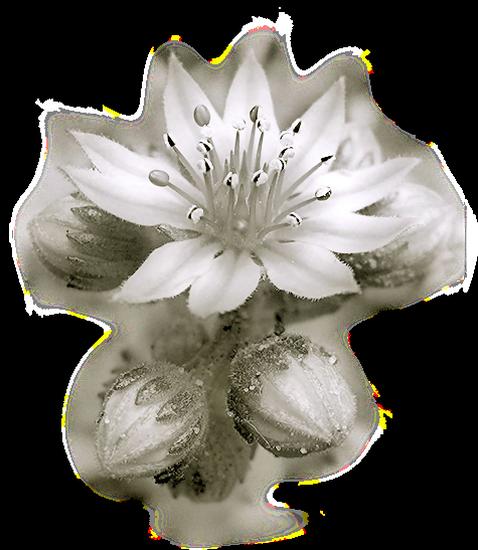 tubes_fleurs_tiram_275