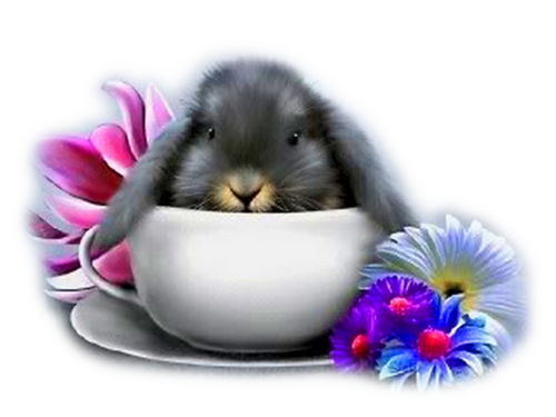 lapins_paques_tiram_991