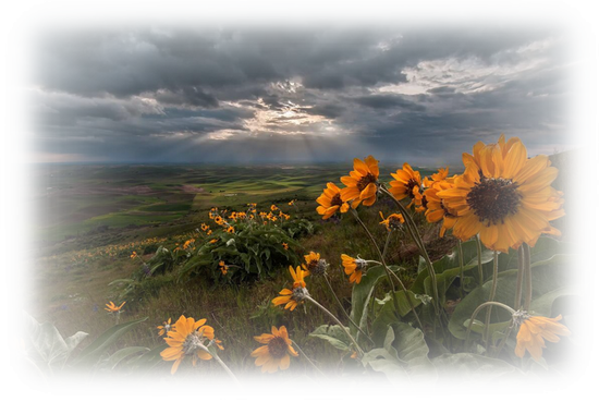 paysage_tiram_909