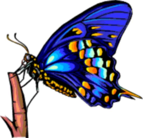 tubes_papillon_tiram_527