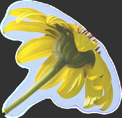 tubes_fleurs_tiram_789