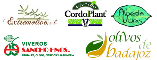 D nde comprar olivos viveros precio venta plantas for Viveros de olivos