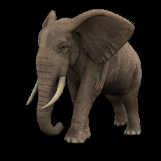 tubes_elephants_tiram_97