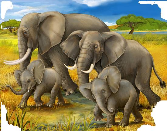 tubes_elephants_tiram_611