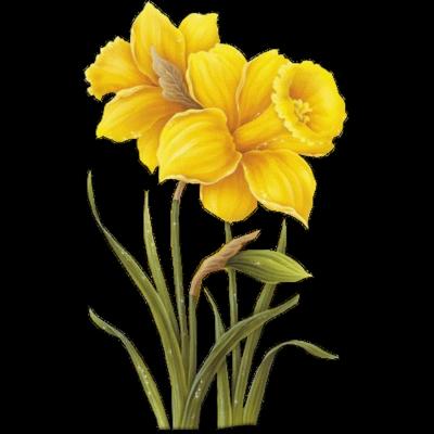 fleurs_paques_tiram_290